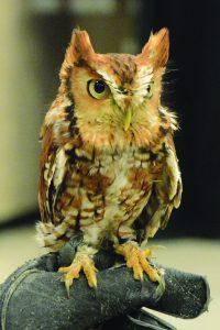 Owl on a mans glove